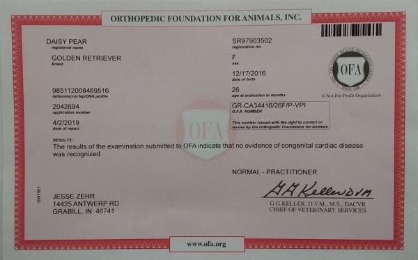 Daisy Congenita No Cardiac Disease Certificate