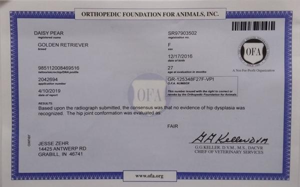 Daisy No Hip Dysplasia Certificate