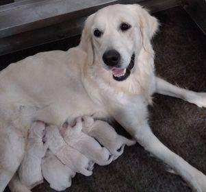 Izum & Baileys puppies 10-30-2020