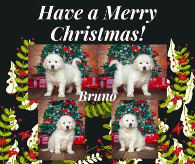Bruno by Izum X Fairy