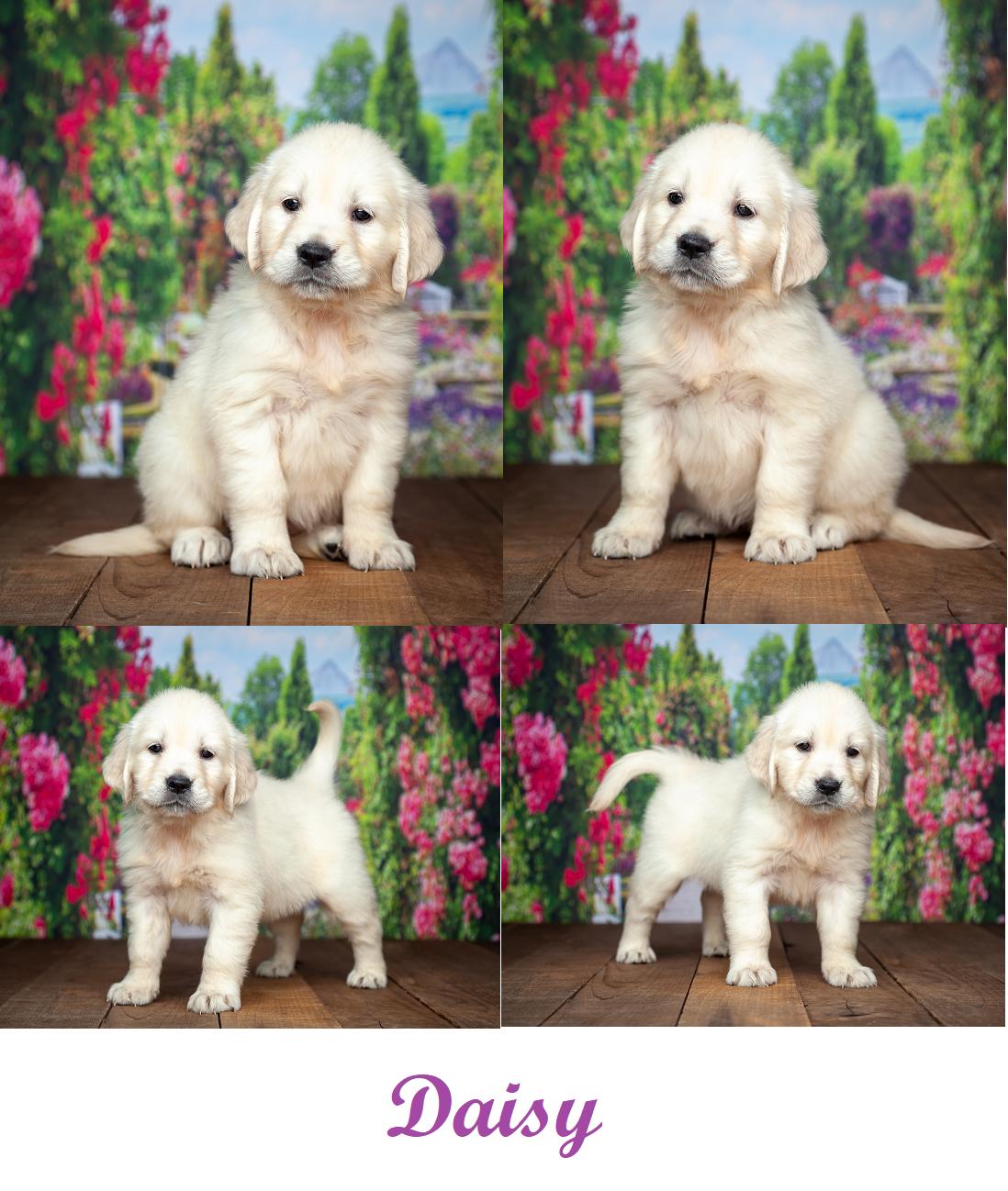 Daisy by Izum & Sunny