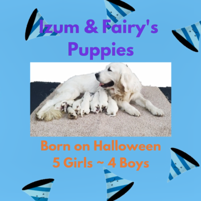 Izum and Fairy's puppies 10-31-2020