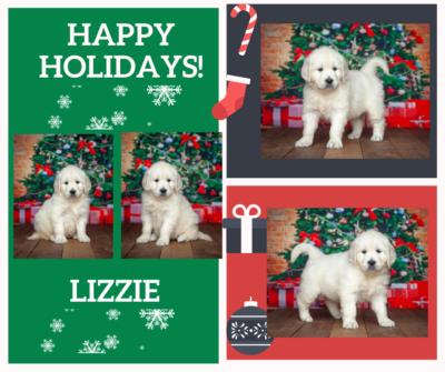 Lizzy By Izum & Fairy