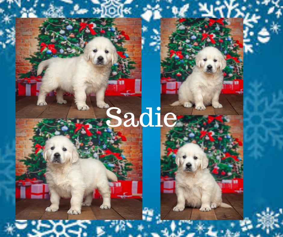 Sadie by Tramin Tango & Tramin Wanna Fall in Love