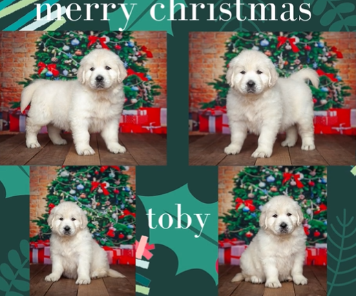 Toby by Izum & Bailey