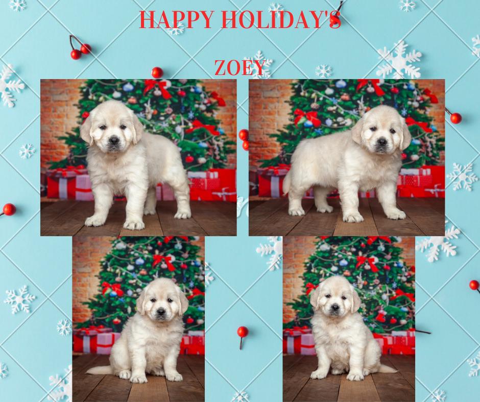 Zoey By Izum & Bailey