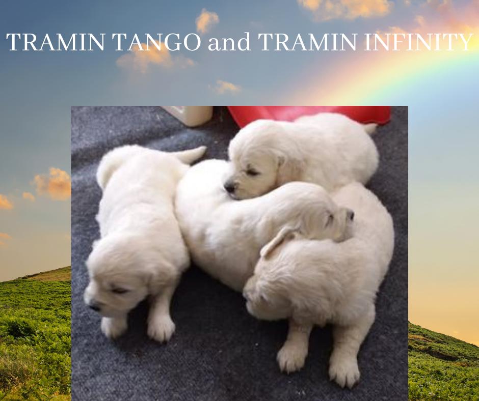 TRAMIN TANGO and TRAMIN INFINITY