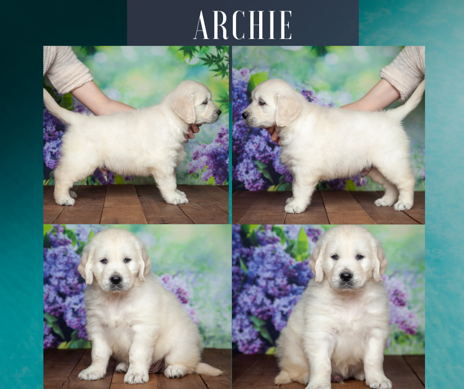 Archie by Izum & Lilly March 4 2021
