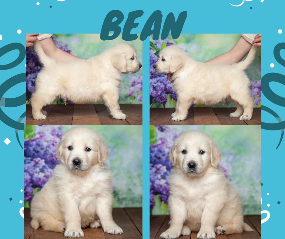 Bean by Izum & Lilly March 4 2021