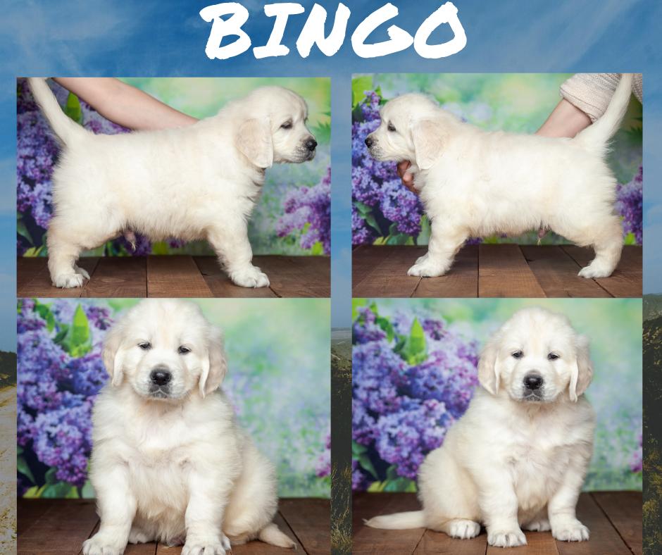 Bingo by Izum & Lilly March 4 2021