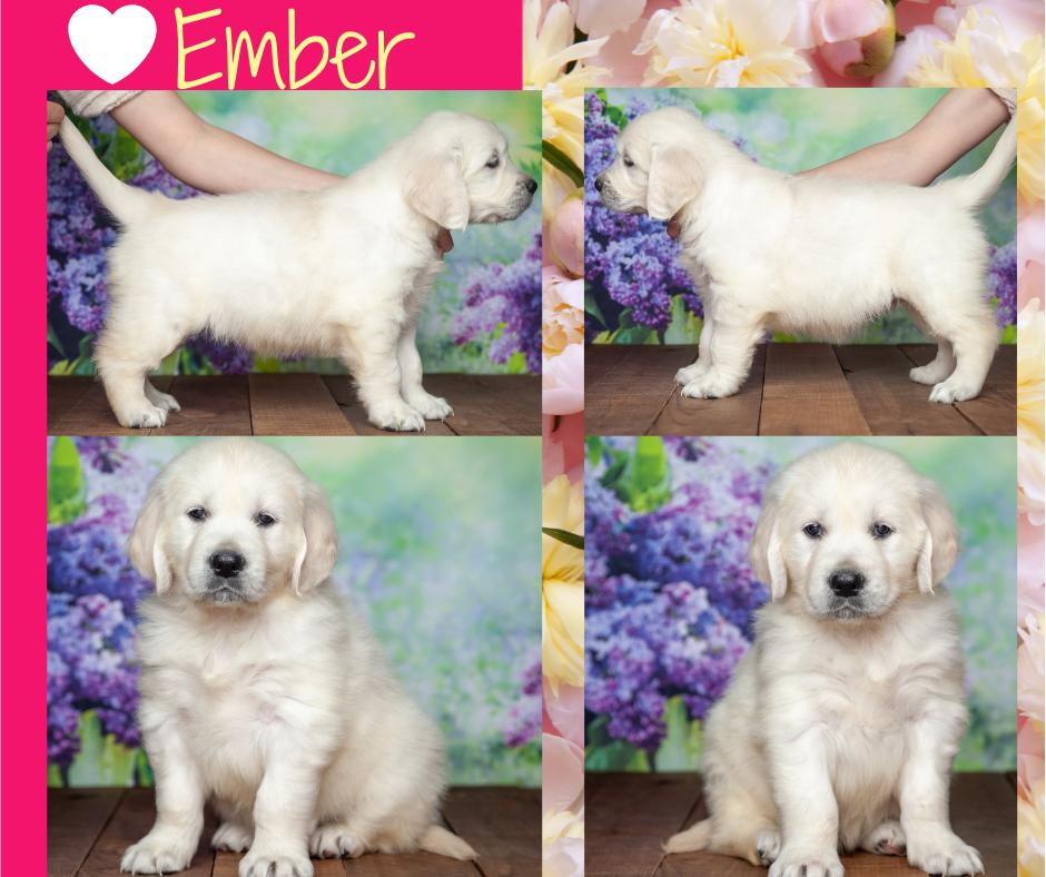 Ember by Izum & Lilly March 4 2021