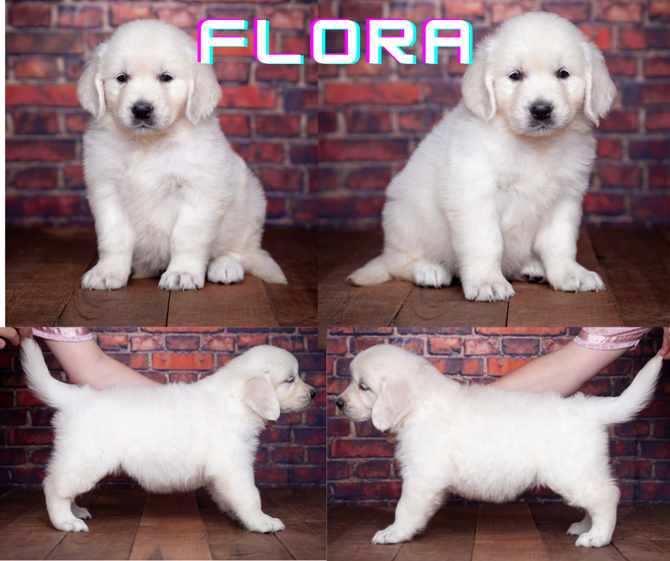 Flora by Mambo & Fairy