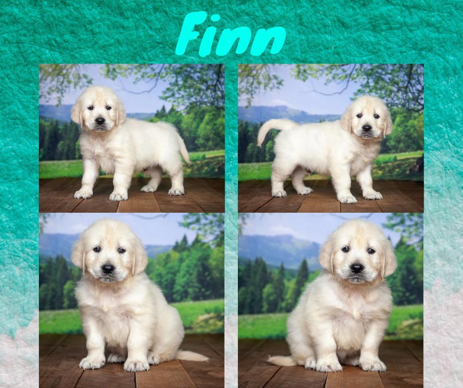 Finn by Izum & Sunny