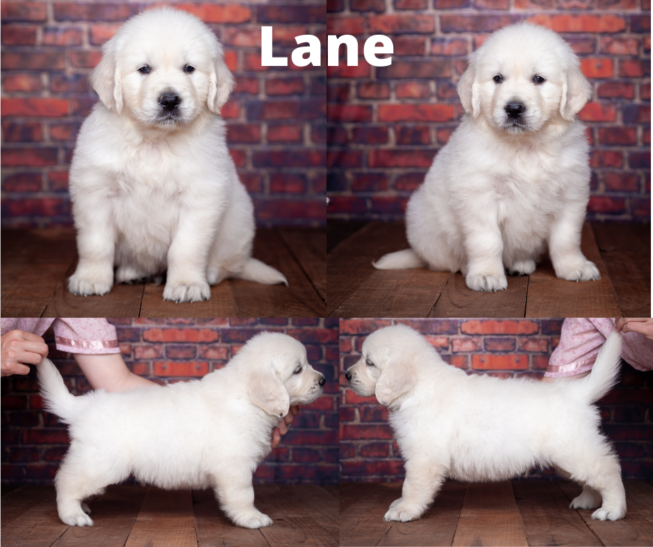 Lane by by Mambo & Fairy