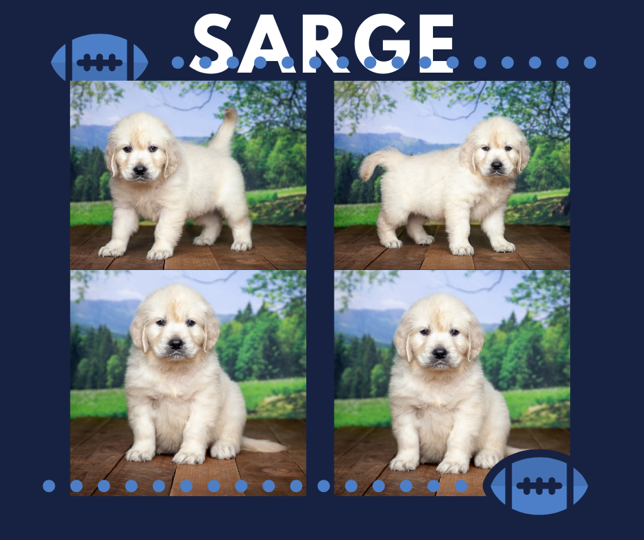 Sarge by Izum & Sunny March 20, 2021